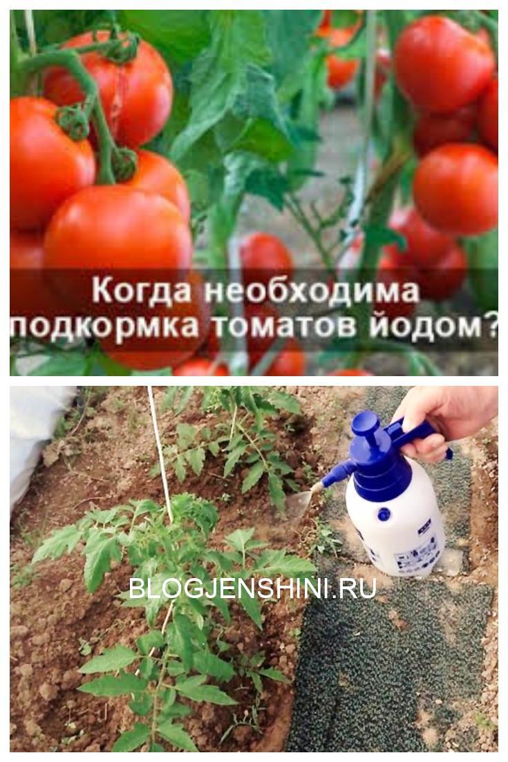 Когда нужна подкормка томатов йодом
