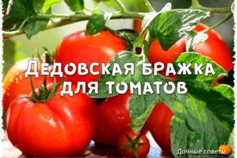 Дедовская бражка для урожая помидор (рецепт нашего подписчика)