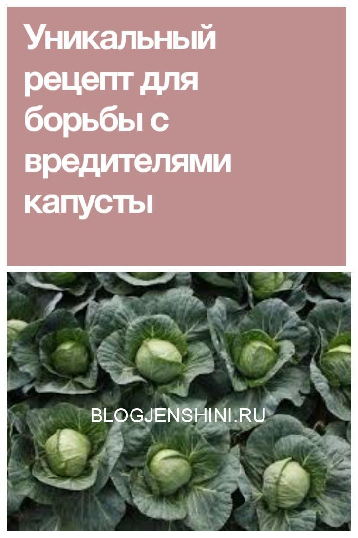 Уникальный рецепт для борьбы с вредителями капусты