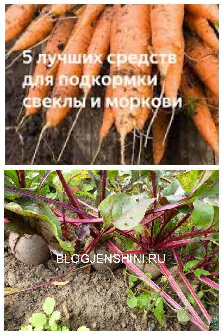 Пять лучших средств для подкормки свеклы и моркови