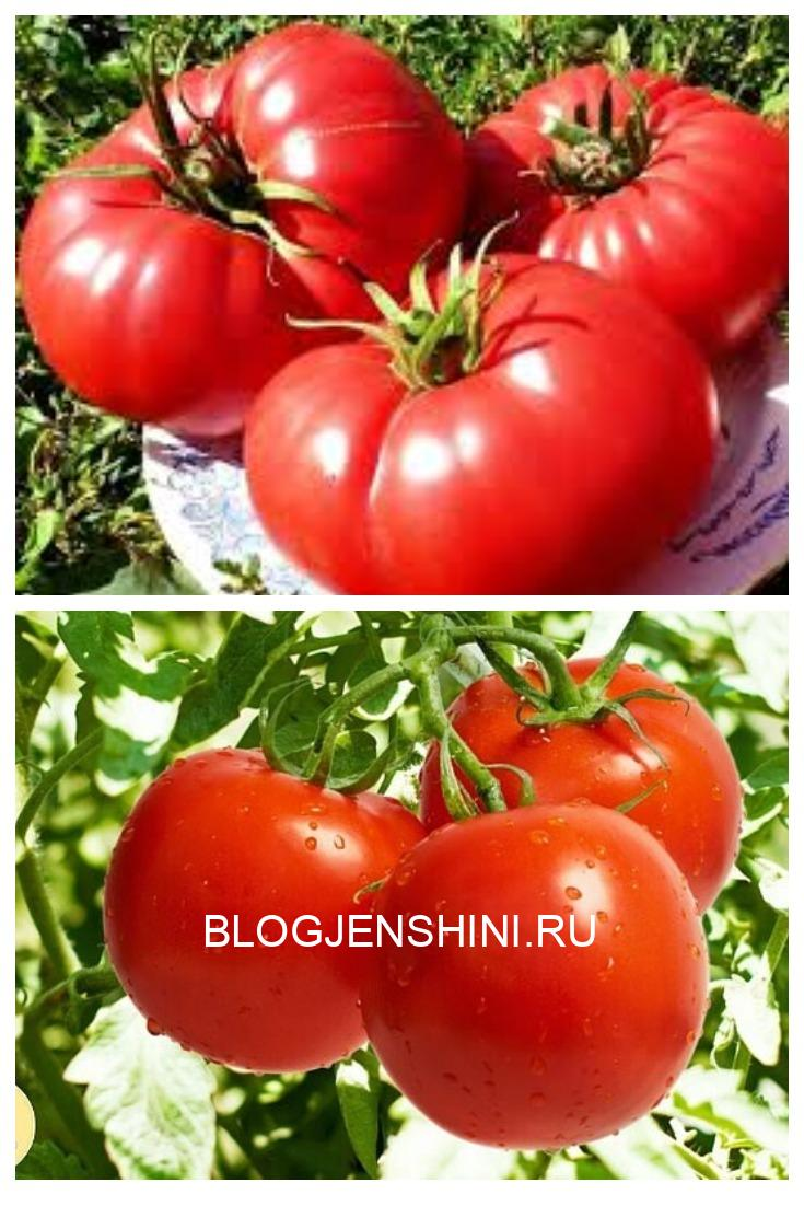 Брaжкa для урожaя помидор Рецепт очень прост.