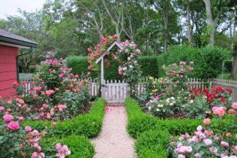 Для защиты роз от от ржавчины, пятнистости и мучнистой росы
