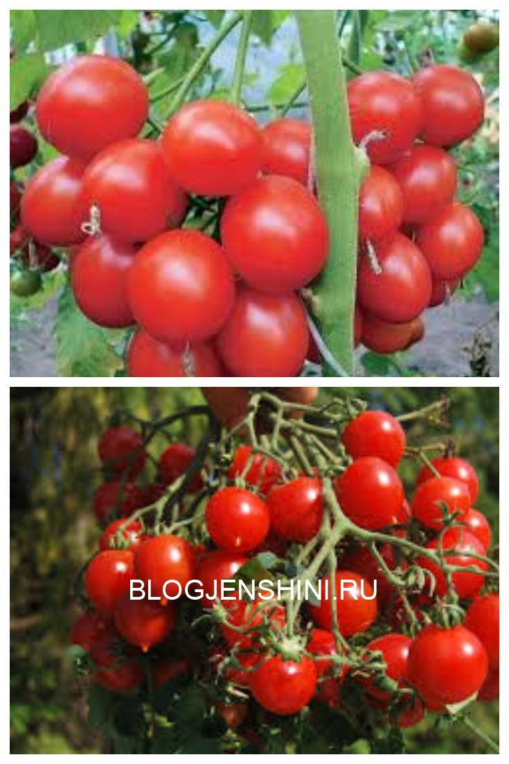 Чем подкормить помидоры в июне/ июле