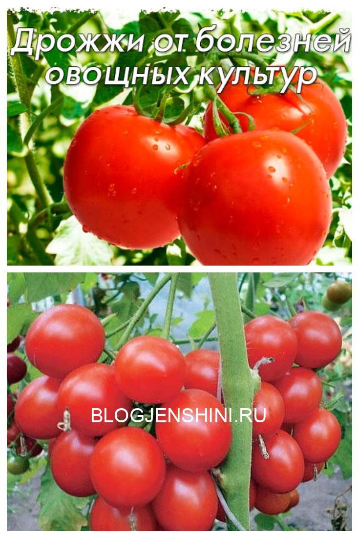 Дрожжи от болезней овощных культур