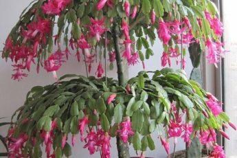 Пять лучших средств для цветения: