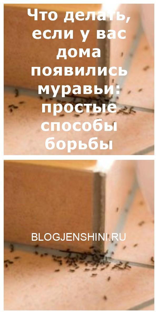 Что делать, если у вас дома появились муравьи: простые способы борьбы