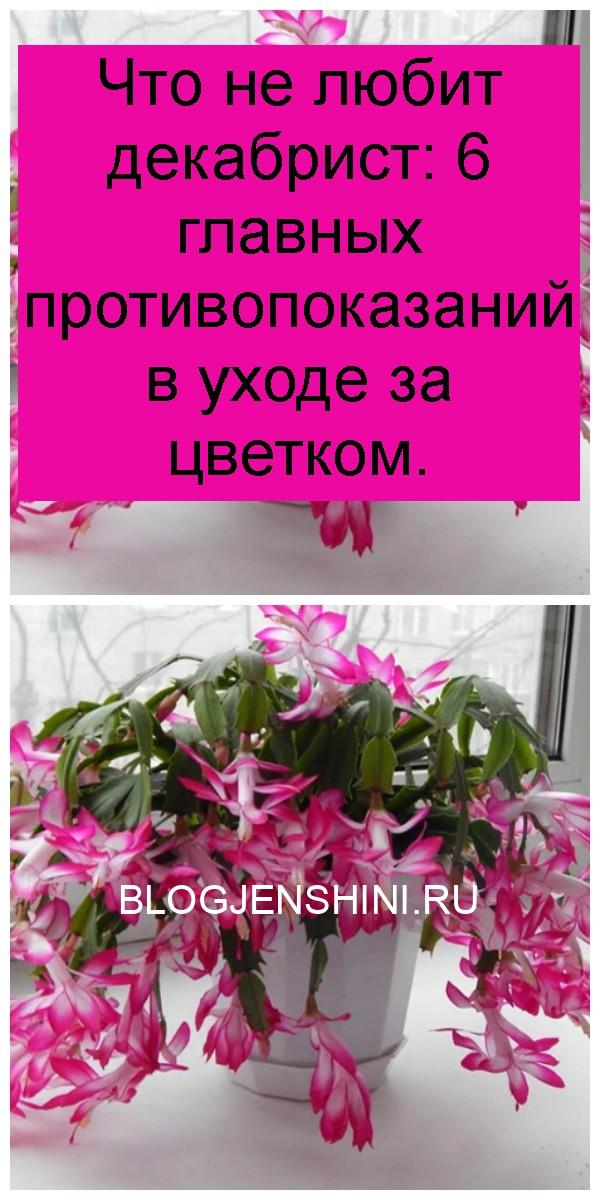 Что не любит декабрист: 6 главных противопоказаний в уходе за цветком 4