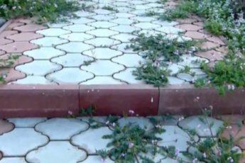 Как избавиться от травы на садовых дорожках: простой и эффективный способ