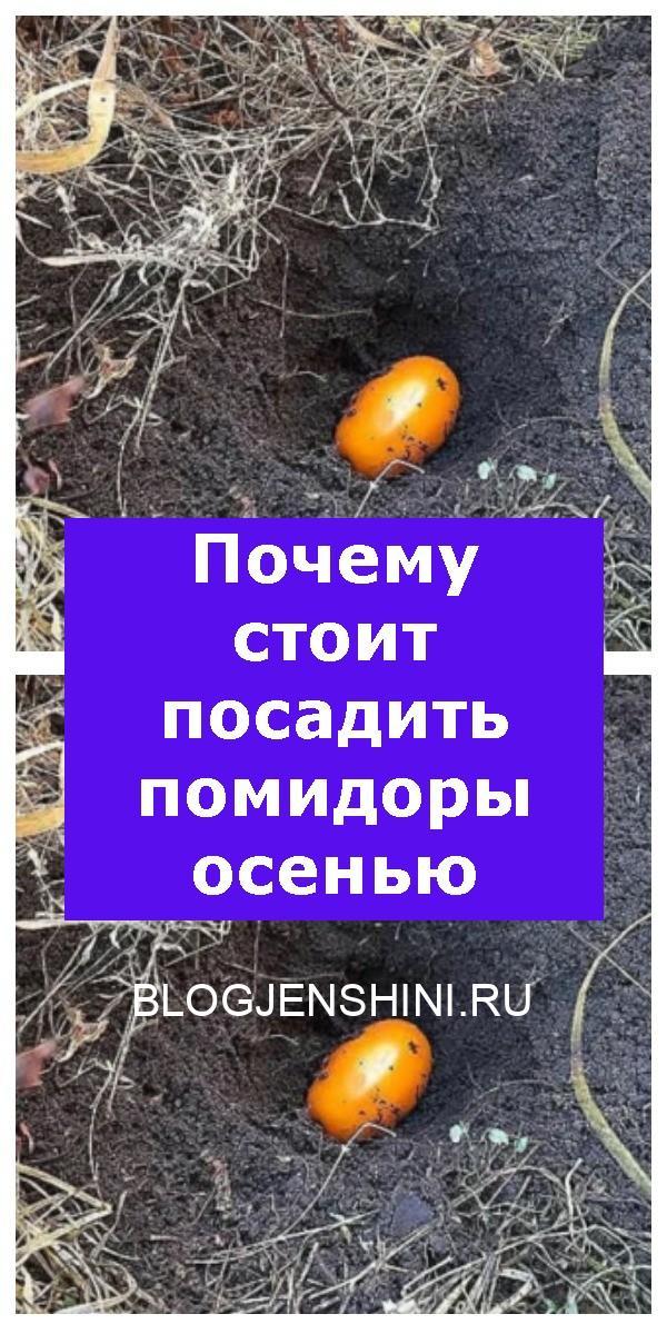 Почему стоит посадить помидоры осенью