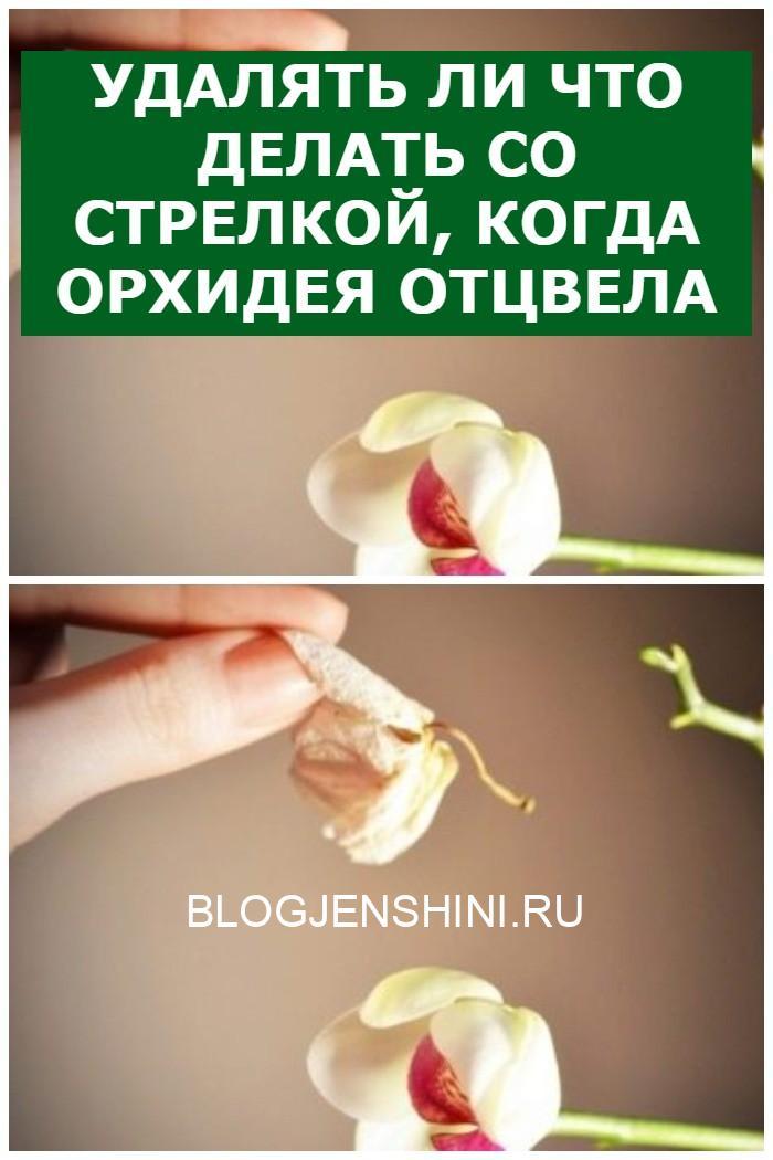 Удалять ли Что делать со стрелкой, когда орхидея отцвела