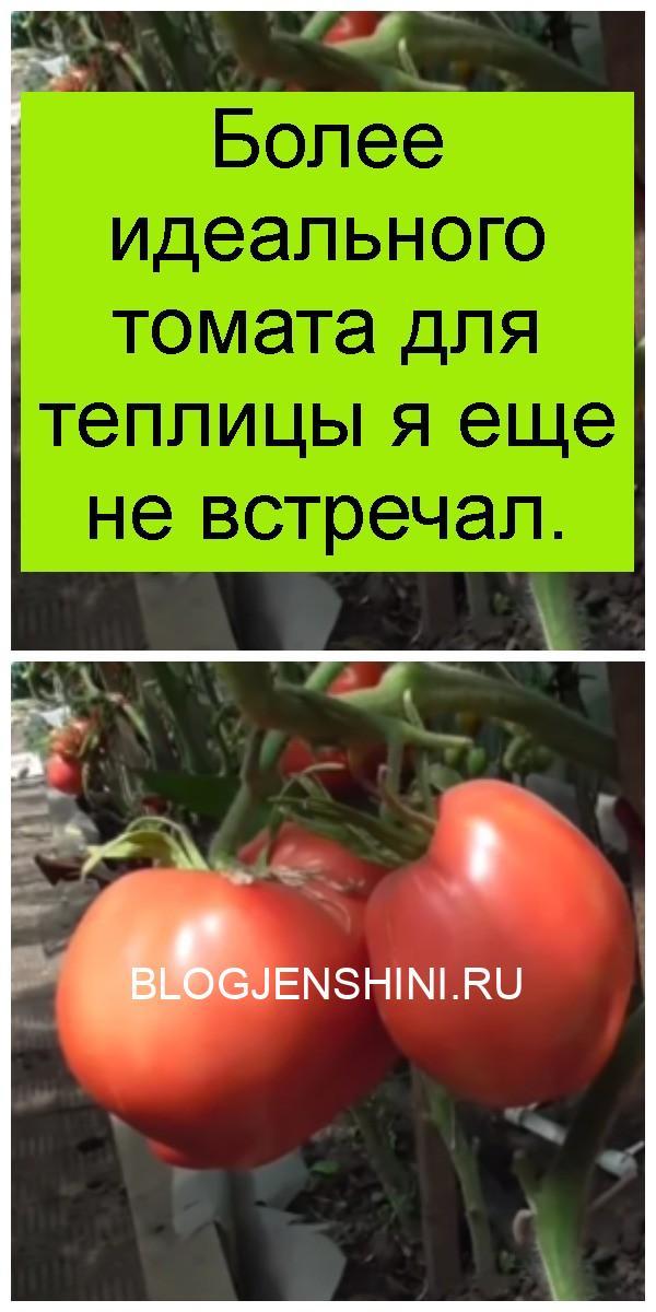 Более идеального томата для теплицы я еще не встречал 4