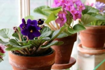 Что положить на дно горшка, чтобы комнатные растения пышно цвели 1