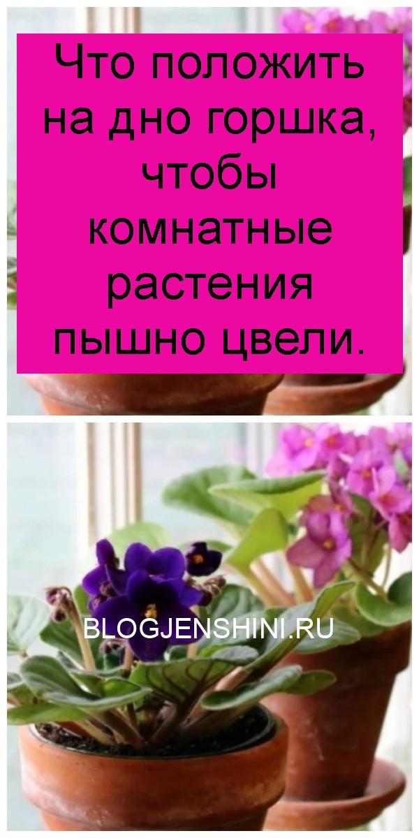 Что положить на дно горшка, чтобы комнатные растения пышно цвели 4