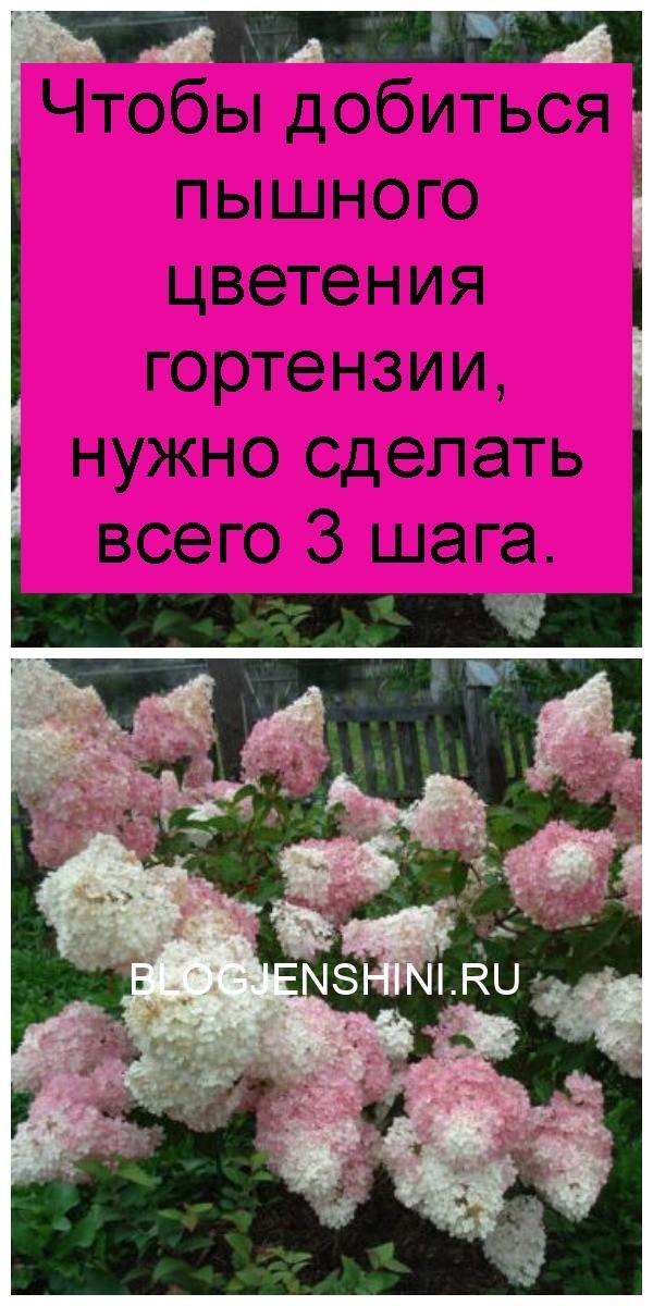 Чтобы добиться пышного цветения гортензии, нужно сделать всего 3 шага 4