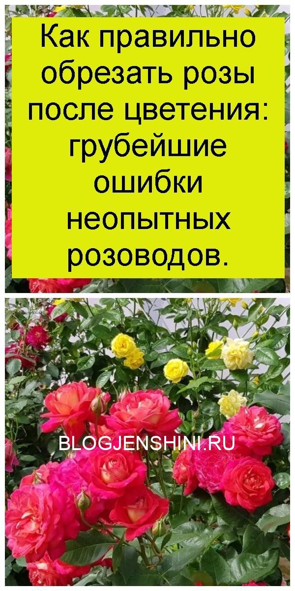 Как правильно обрезать розы после цветения: грубейшие ошибки неопытных розоводов 4