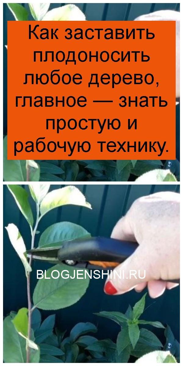 Как заставить плодоносить любое дерево, главное — знать простую и рабочую технику 4