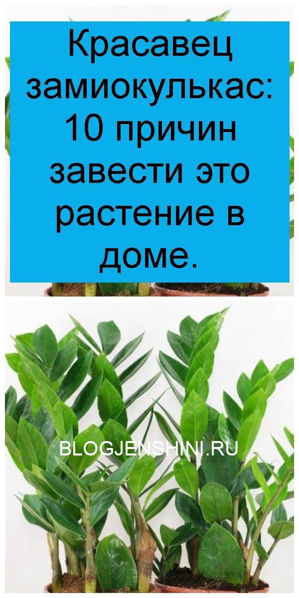 Красавец замиокулькас: 10 причин завести это растение в доме 4
