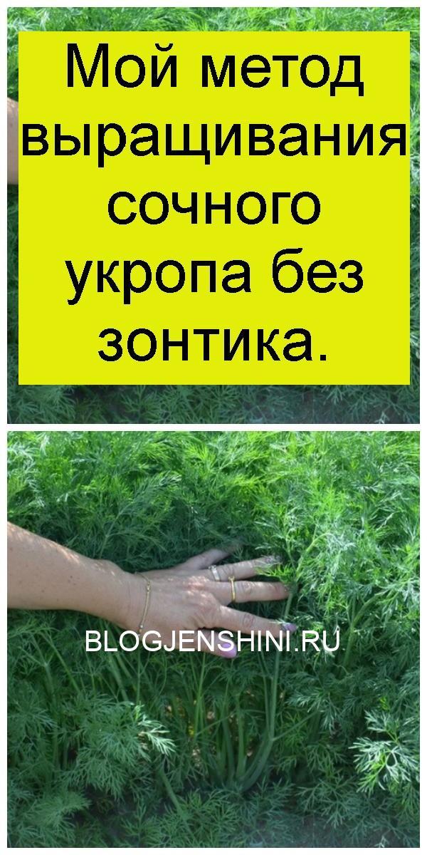 Мой метод выращивания сочного укропа без зонтика 4