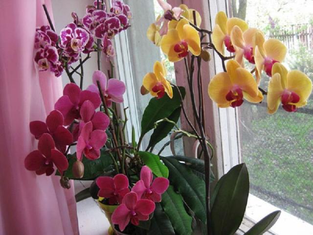 Натуральные подкормки для орхидей из банановых шкурок 1