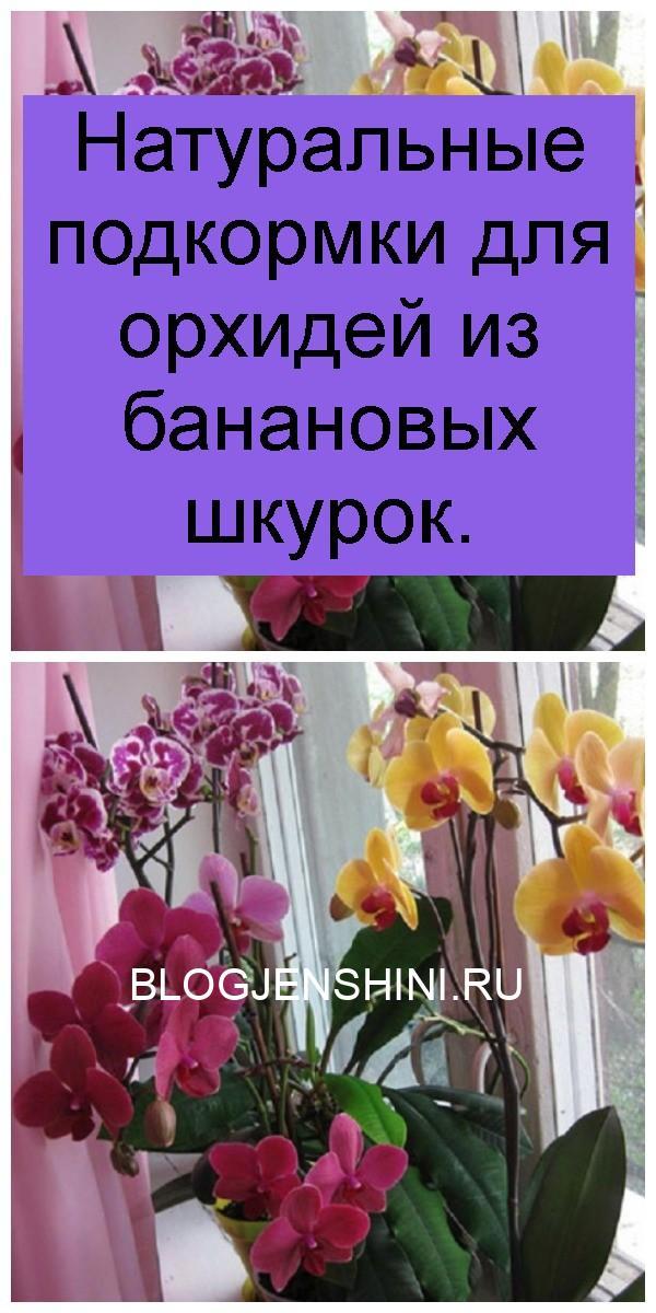 Натуральные подкормки для орхидей из банановых шкурок 4