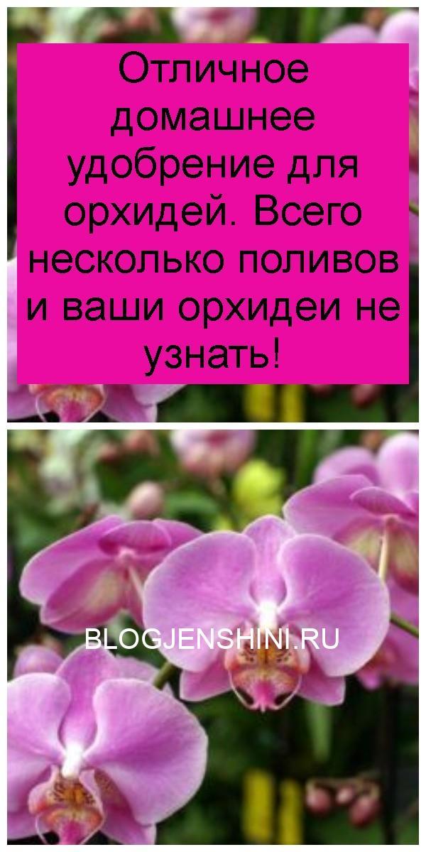 Отличное домашнее удобрение для орхидей. Всего несколько поливов и ваши орхидеи не узнать 4