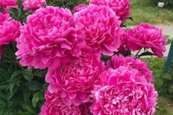 Подкормки для цветов, чтобы росли, как «на дрожжах» 1