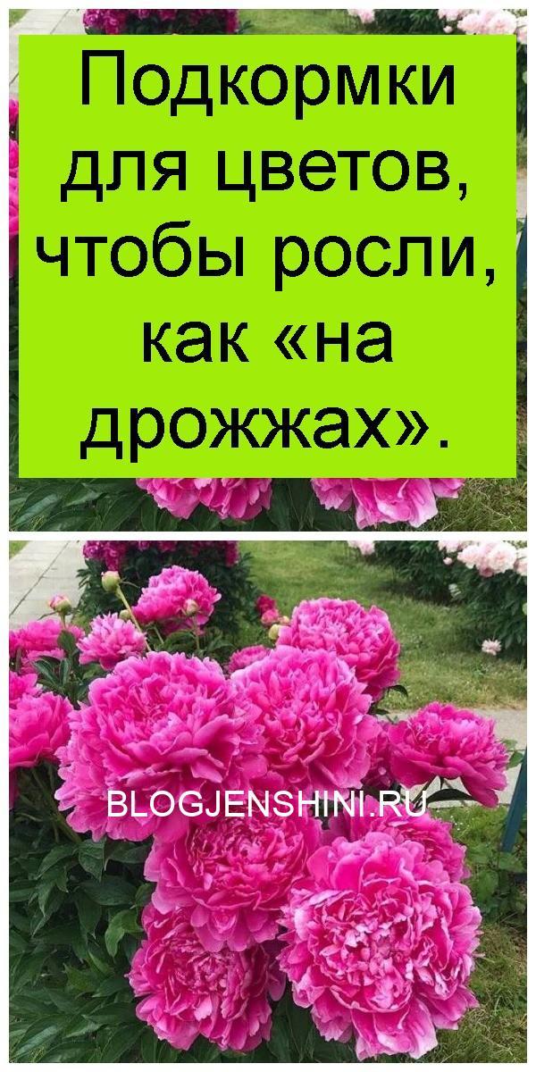 Подкормки для цветов, чтобы росли, как «на дрожжах» 4