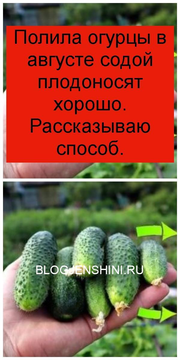 Полила огурцы в августе содой плодоносят хорошо. Рассказываю способ 4