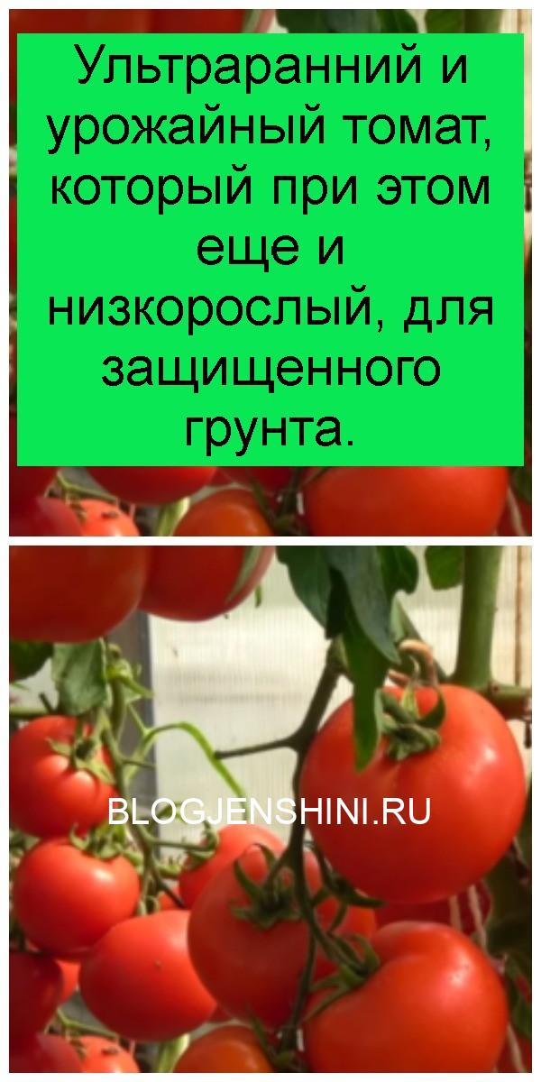 Ультраранний и урожайный томат, который при этом еще и низкорослый, для защищенного грунта 4