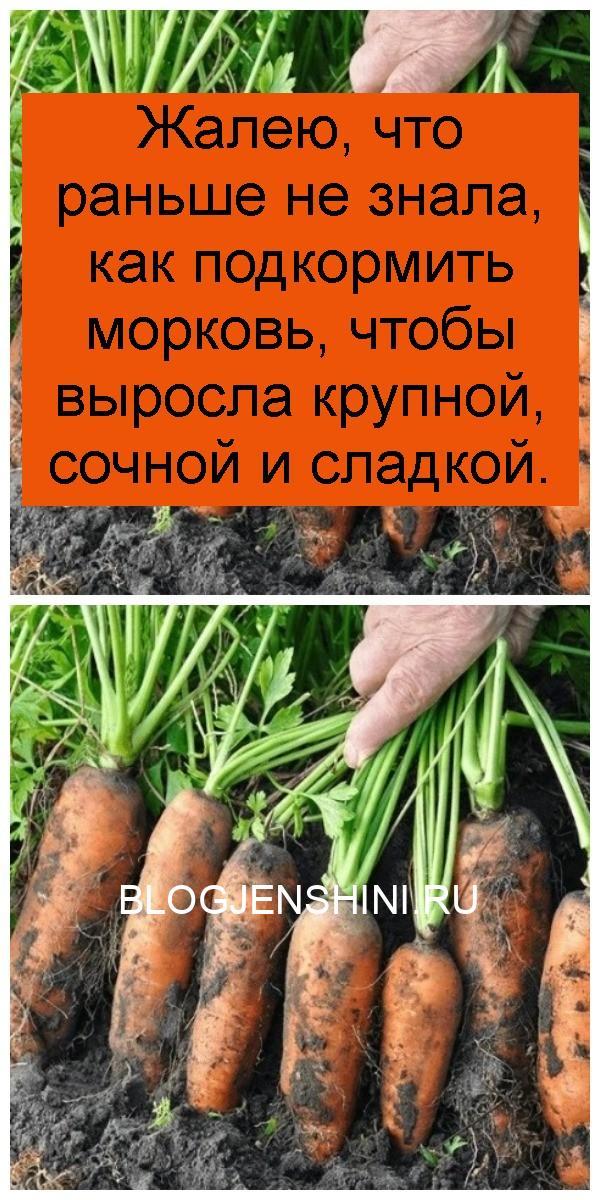 Жалею, что раньше не знала, как подкормить морковь, чтобы выросла крупной, сочной и сладкой 4